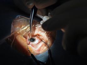 Chirurgia na żywo – VIII edycja